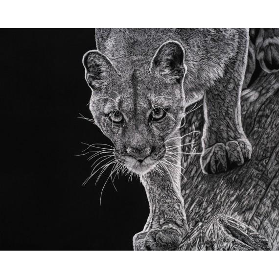 Limited edition - Kali, le Puma, Vincennes