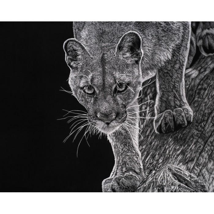 Tirage limité - Kali, le Puma, Vincennes