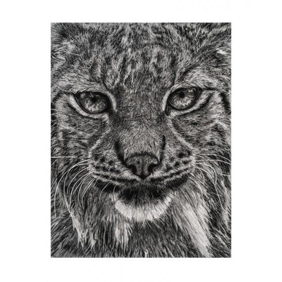 Tirage limité - Einar, Le Lynx, Ménagerie