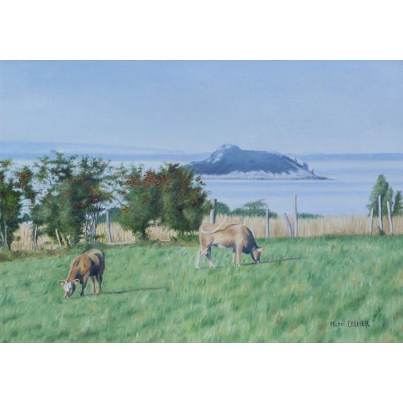 Les vaches et l'ilot de Tombelaine, Baie du Mont Saint-Michel