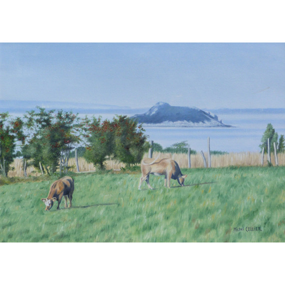 The Cows and the ilot de Tombelaine, Baie du Mont Saint-Michel